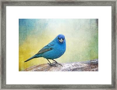 Mr. Blue Framed Print