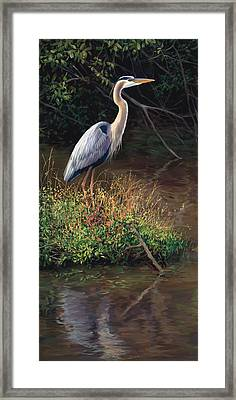 Mr Blue Heron Framed Print by Laurie Hein