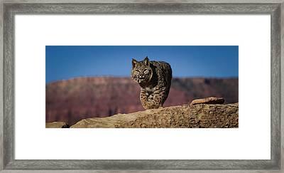 Mr. Bob Cat Framed Print by Diane Bohna