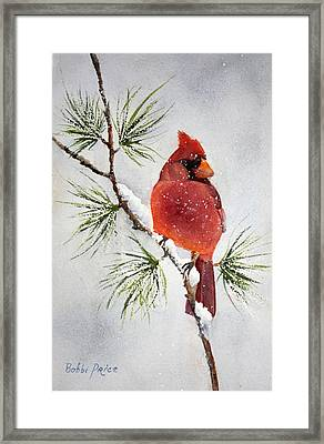 Mr Cardinal Framed Print by Bobbi Price