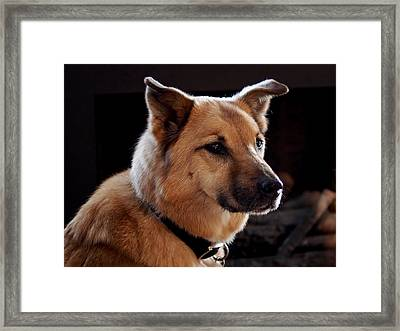 Mr. Charlie Framed Print by Rona Black