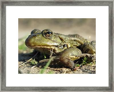 Framed Print featuring the photograph Mr. Charming Eyes. Side View by Ausra Huntington nee Paulauskaite