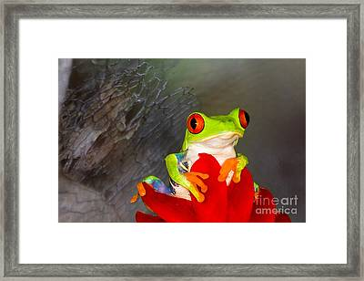 Mr. Curious Framed Print