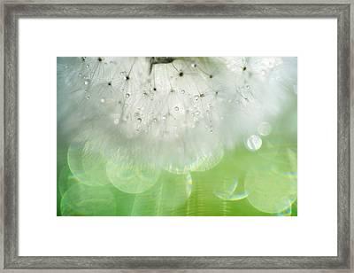 Mr. Dandelion. Inner Light Framed Print by Jenny Rainbow