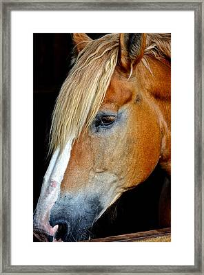 Mr Ed Framed Print by Frozen in Time Fine Art Photography