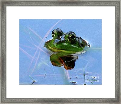 Framed Print featuring the photograph Mr. Frog by Donna Brown
