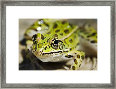 Mr. Froggy Framed Print by Josh Clifford