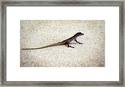 Framed Print featuring the photograph Mr. Gecko by Pennie  McCracken