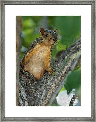 Mr.  Inquisitive  Framed Print by Robert Bales