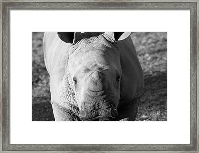 Mr Inquisituve Framed Print by Chris Whittle
