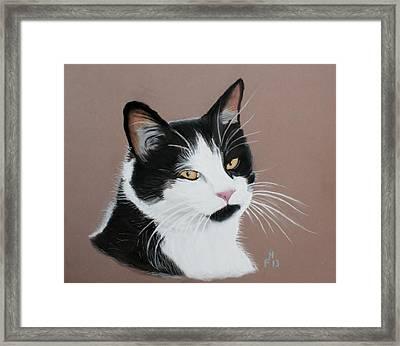 Mr Jinx Framed Print by Frank Hamilton