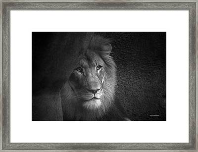 Mr Lion In Black And White Framed Print by Thomas Woolworth