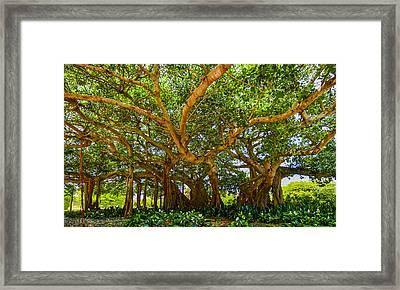 Mr. Mac's Tree Framed Print