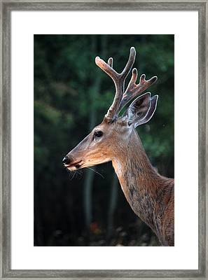 Framed Print featuring the photograph Mr. Majestic by Rita Kay Adams