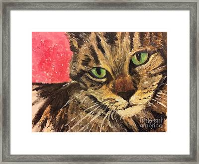 Mr Maowell Framed Print by Isabella F Abbie Shores FRSA
