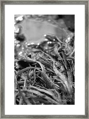 Mr. Nodosum Framed Print by Susan Hernandez