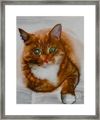 Mr. Orange Framed Print