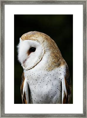 Mr Owl  Framed Print