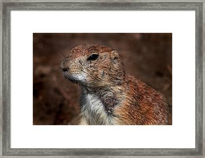 Mr Prairie Dog Framed Print