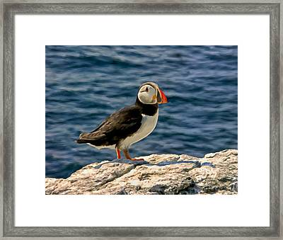Mr. Puffin Framed Print by Michael Pickett