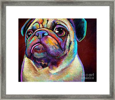 Mr. Pugnacious  Framed Print by Robert Phelps
