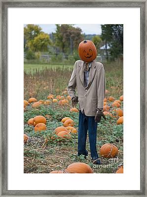 Mr. Pumpkin Head Framed Print by Juli Scalzi