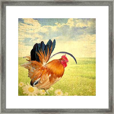 Mr. Rooster Greets The Day Framed Print