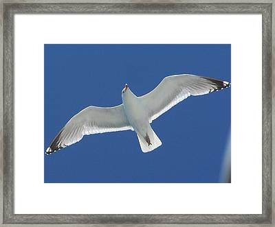 Seagull Framed Print by Jewels Blake Hamrick