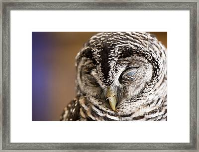 Mr Sleepyhead Framed Print