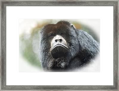 Mr Smiley A Black Howler Monkey Framed Print by Jim Fitzpatrick