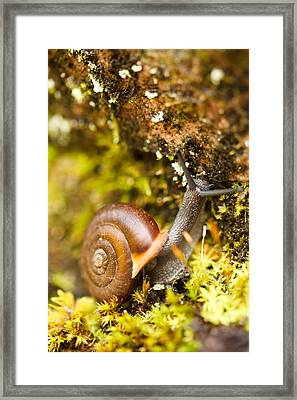 Mr. Snail Framed Print by Shane Holsclaw