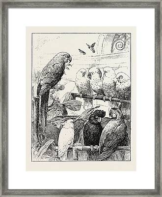 Mr. Stacy Markss A Select Committee Is Unintentionally Framed Print by English School