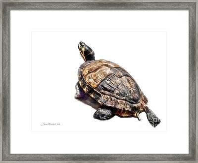 Mr. Turtle Framed Print by Joan  Minchak