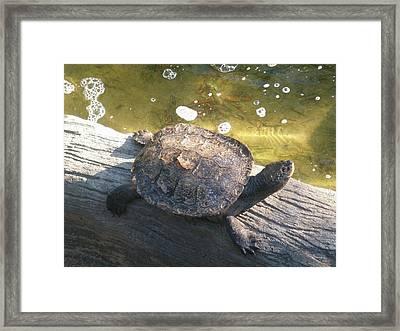 Mr Camaflauged Turtle Framed Print
