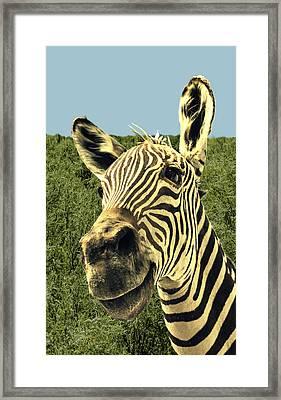 Mr. Zeb Framed Print