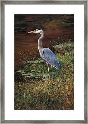 Mrs Blue Heron Framed Print by Laurie Hein