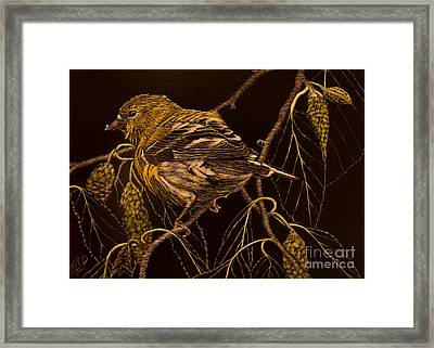 Mrs Goldfinch Framed Print
