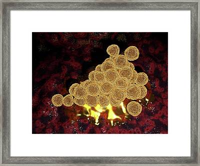 Mrsa Bacteria Framed Print by Hipersynteza