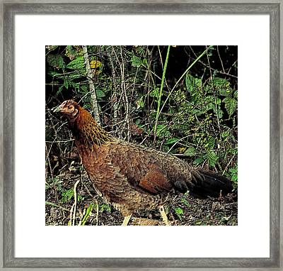 Ms. Chicken Framed Print by Maria Urso