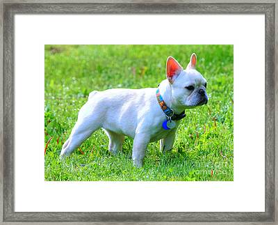Ms. Quiggly - French Bulldog Framed Print