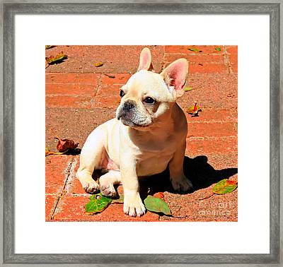 Ms. Quiggly Framed Print
