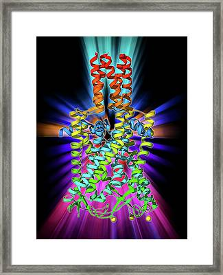 Mscl Ion Channel Protein Structure Framed Print