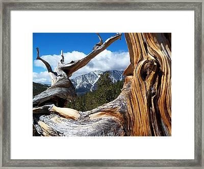 Mt. Charleston Thru A Tree Framed Print