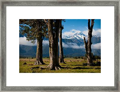Mt Cook Through Trees Framed Print