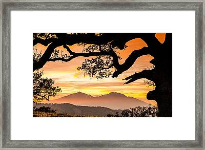 Mt Diablo Framed By An Oak Tree Framed Print