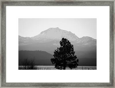 Mt. Lassen With Tree Framed Print