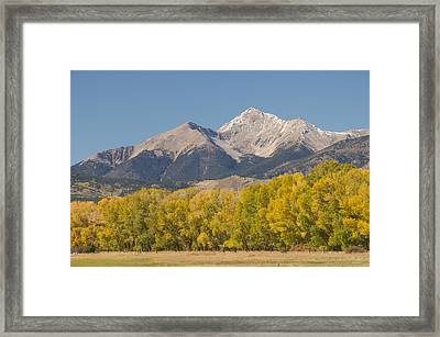 Mt. Yale - Autumn Framed Print by Aaron Spong