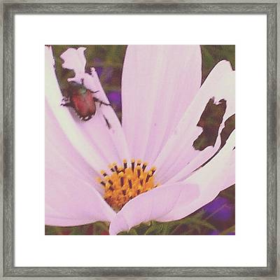 Muching On Beauty Framed Print by Thomasina Durkay