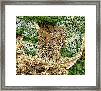 Mucin Secretion In The Small Gut Framed Print