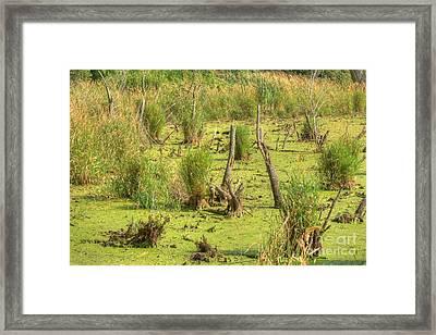 Mucky Swamp Framed Print